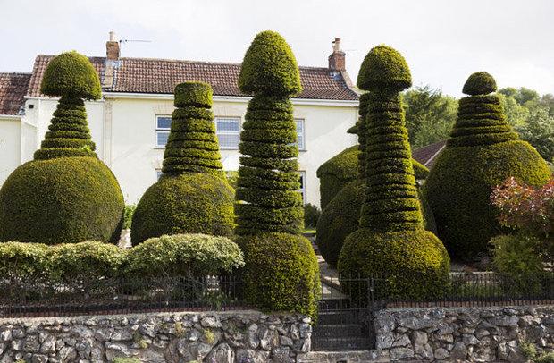 penis topiary